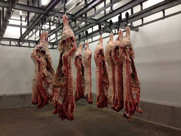 Texas A&M Meat Science's Beef 101 hanging room.