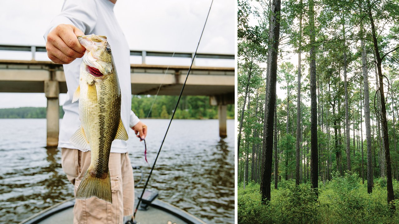 The catch of the day near Holly Park Marina, in Milam (left) and the Sabine National Forest (right).